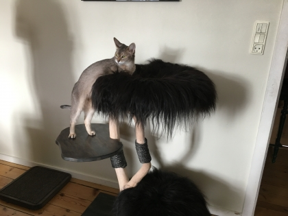 beautiful Mv have a good time with your new cat tree and enjoy it