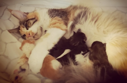 nun sind auch die Kitten da ;-) sooo süß
