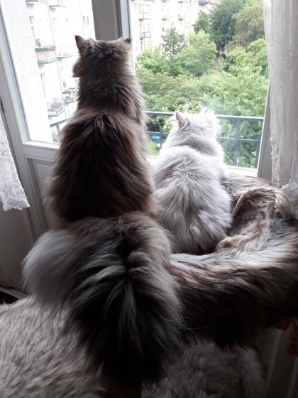 Kratzbaumn Funi mit Fredo und Fernando :-)
