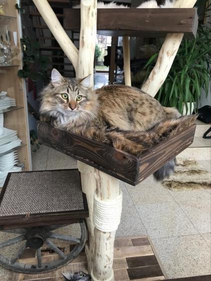 Naturkratzbaum Julia, für große Katzen, Eichenholz