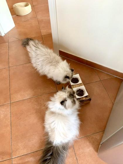 Percy und Loui testen ihren neuen Fressnapf