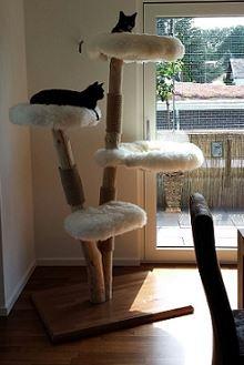 Natural wood cat tree - Melanie-