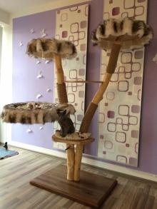 Natural wood cat tree - Alice -