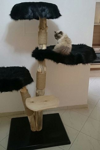 Natural wood cat tree - Vesper -