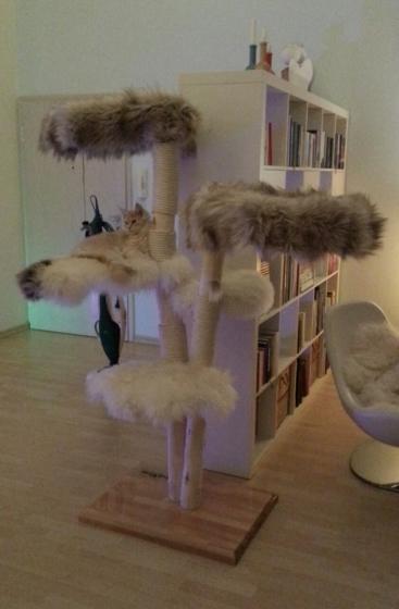 Natural wood cat tree - Tammie -