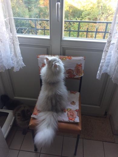 Fredo wartet auf Funi ...