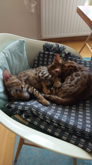 so liebe Katzeneltern :-)