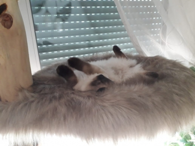 eine super Katzenmama :-)