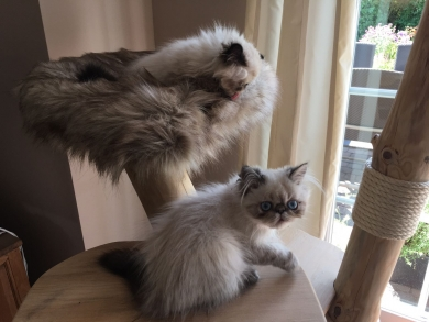 Percy und Loui sind eingezogen :-)
