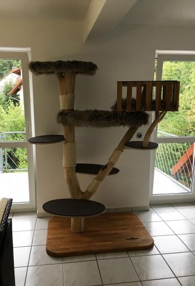 Baum wartet auf die Katzen :-)