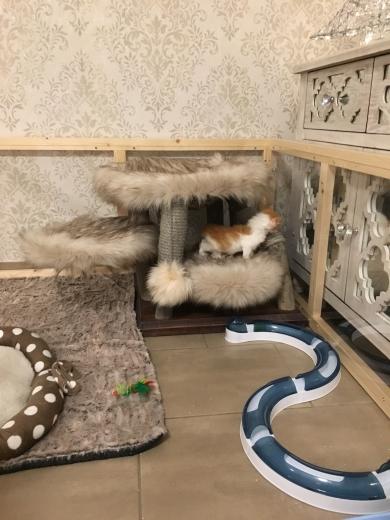 Kitten auf Entdeckungstour :-)