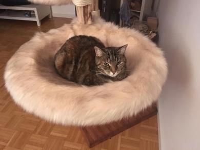 Und auch die schüchterne Katze hat nun ihren Platz gefunden ;-).