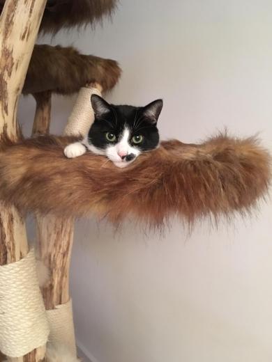Es war mir eine große Freude euch den Baum zu übergeben!