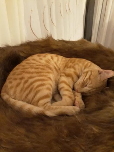 Bruno hat seinen neuen Schlafplatz gefunden ;-)