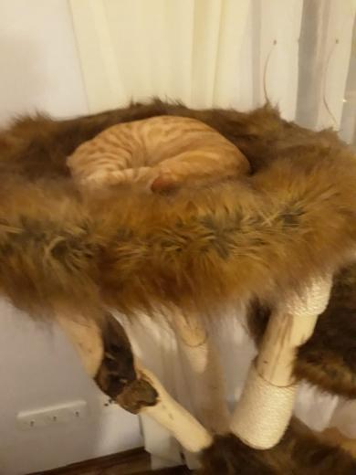 Vielen lieben Dank an die lieben Katzeneltern!