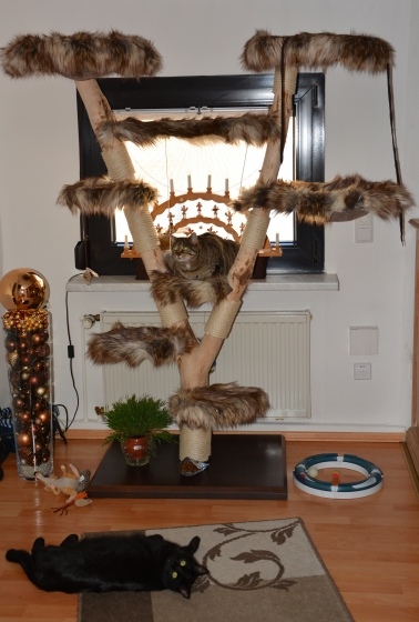 Natural wood cat tree - Gismo -
