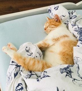 Frechi bereitet sich auf den Winterschlaf vor ;-)