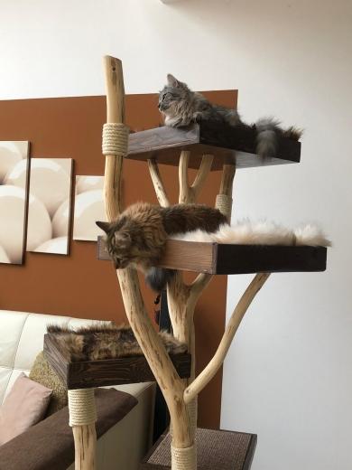 beide Katzen haben ihren Platz gefunden :-)