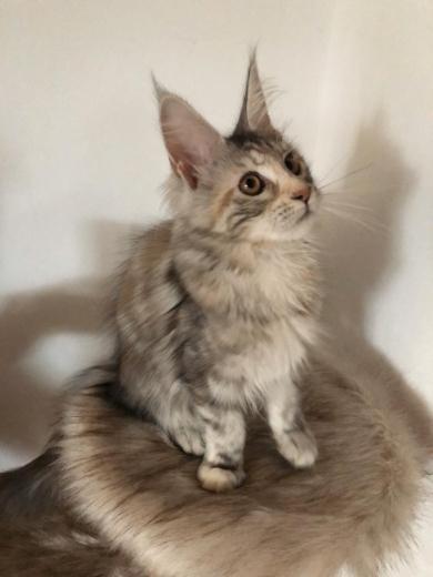 bald kommen die ersten Kitten :-)