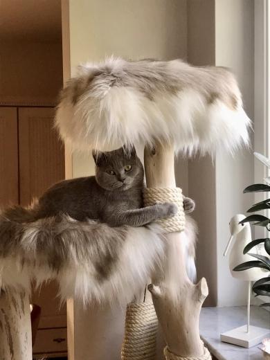 Vielen Dank an die total liebe Katzenmama!