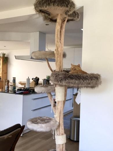 Naturkratzbaum Ilha Fogo nach Umzug ins neue Haus